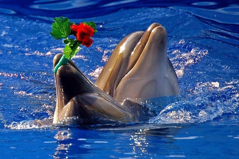 С днем рождения картинка с дельфином, картинки